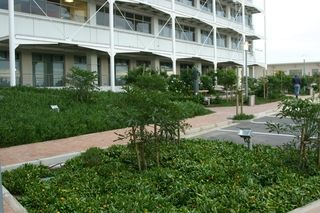 landscaping indigenous trees and groundcovers cdc office complex