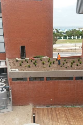 landscaping roof garden planting pe