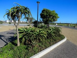 landscaping with aloes kings beach